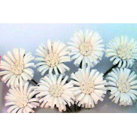 White Daisies - Decorative Flowers By Scrapberry's